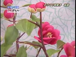 工芸菓子「玉椿」