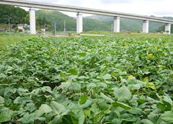 兵庫県丹波市にて農家